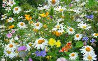 Free Wallpaper Flowers And Garden 26 Designs