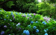 Free Wallpaper Flowers And Garden 32 Home Ideas