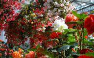 Free Wallpaper Flowers And Garden 4 Inspiration