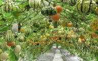 Garden Ideas Vegetable  23 Picture