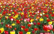 Garden Pictures For Background 5 Arrangement