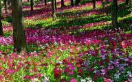 Garden Wallpaper Hd 22 Decor Ideas