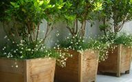 Big Garden Plants  11 Decoration Idea