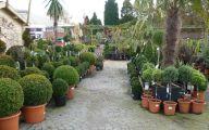 Big Garden Plants  24 Arrangement
