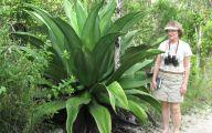 Big Garden Plants  4 Inspiration