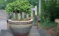 Big Gardens In Small Spaces  28 Design Ideas