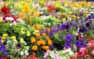 Garden Flowers 27 Decoration Inspiration