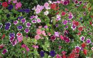 Garden Flowers 29 Inspiring Design