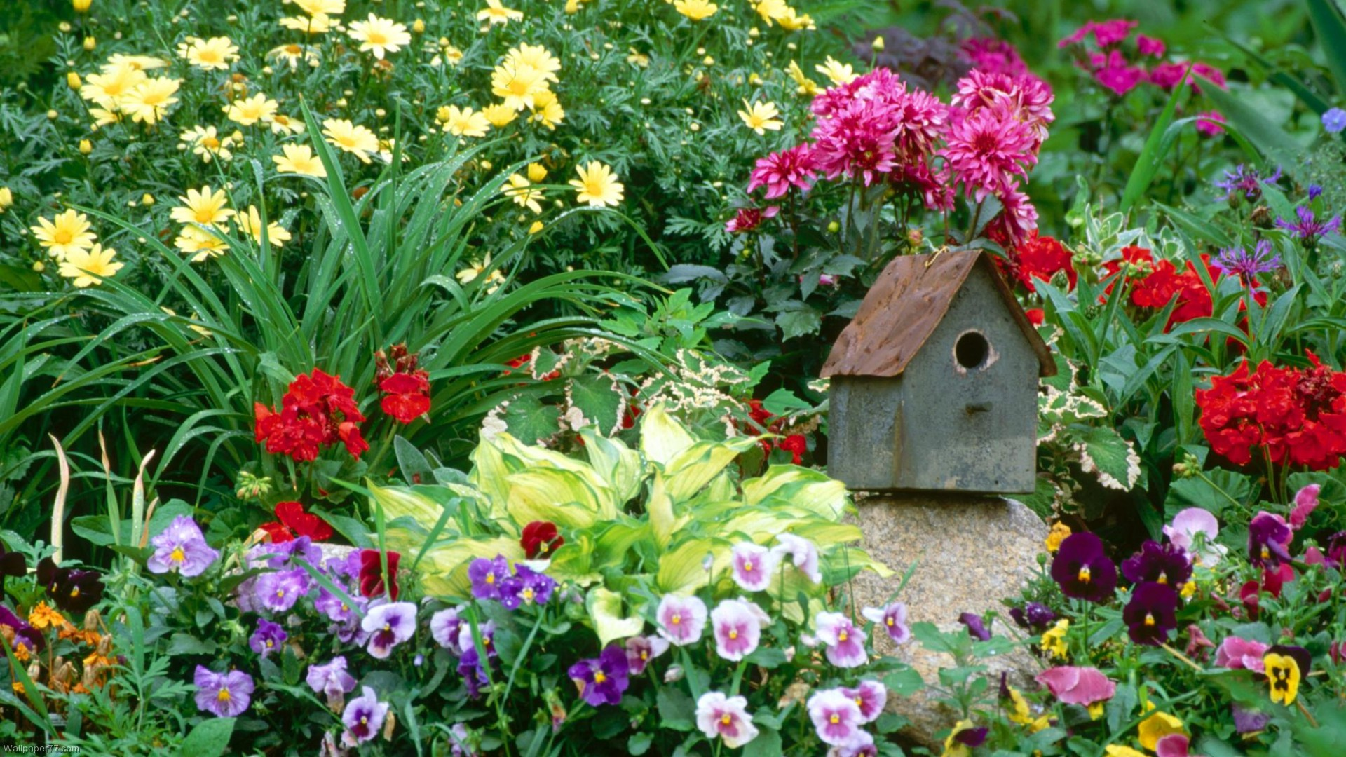 Free Wallpaper Flowers And Garden Renovating Ideas
