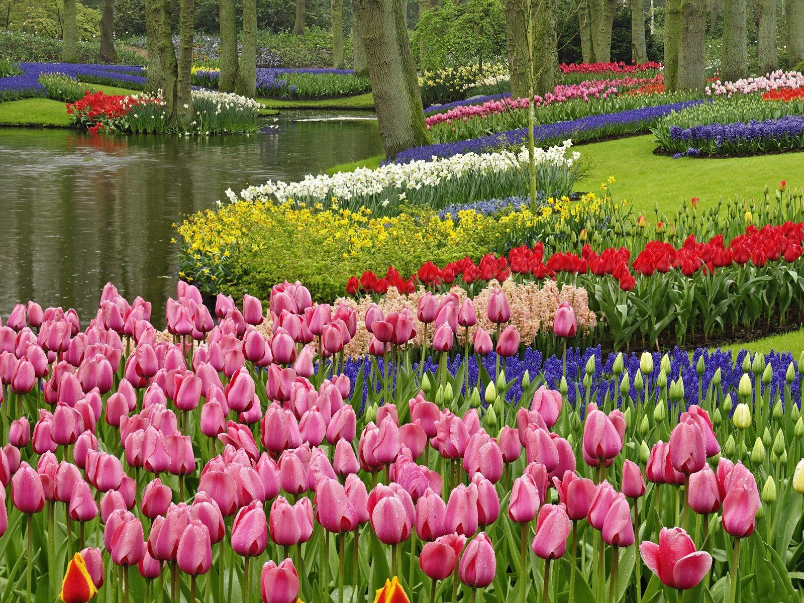 eleletsitz tulip garden ideas images