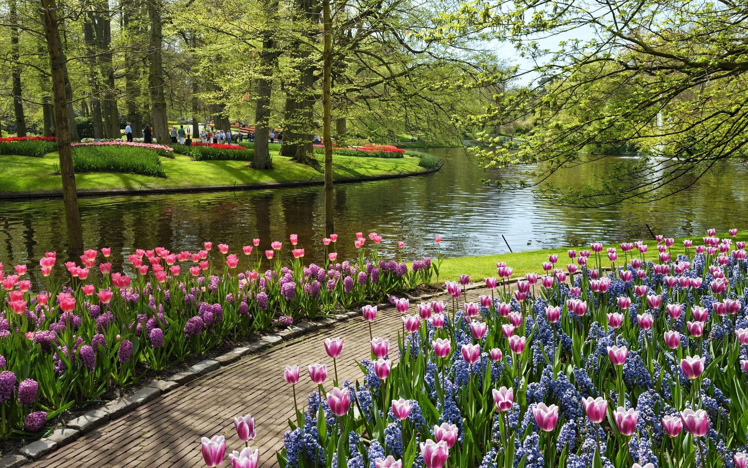 Spring flower festivals to delight travelers  Koreanet